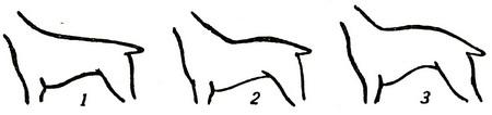 Спина собаки