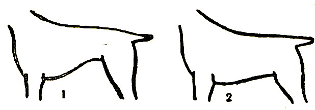 Живот собаки