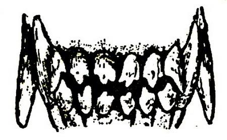 Зубы собаки в возрасте одного года