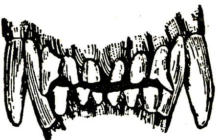Зубы собаки в возрасте четырех лет