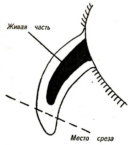 http://www.dalmacia.ru/media/1/DL_142.jpg