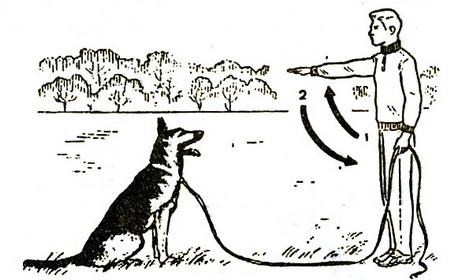 Приучение собаки ложиться по жесту