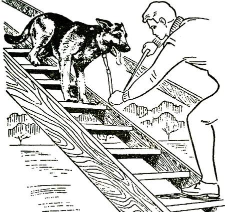 Преодоление лестницы собакой