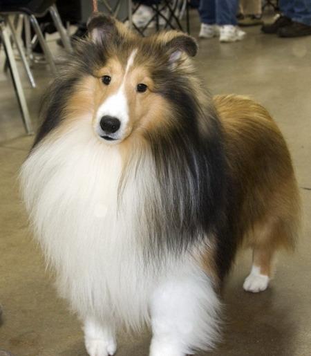 собак красивых фото породы про разной